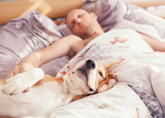 Dormir-perros- estudios-información-clínica mayo-mayo clinic
