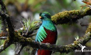 Quetzal-zulena escobedo