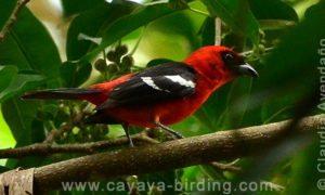 conteo-aves-guatemala